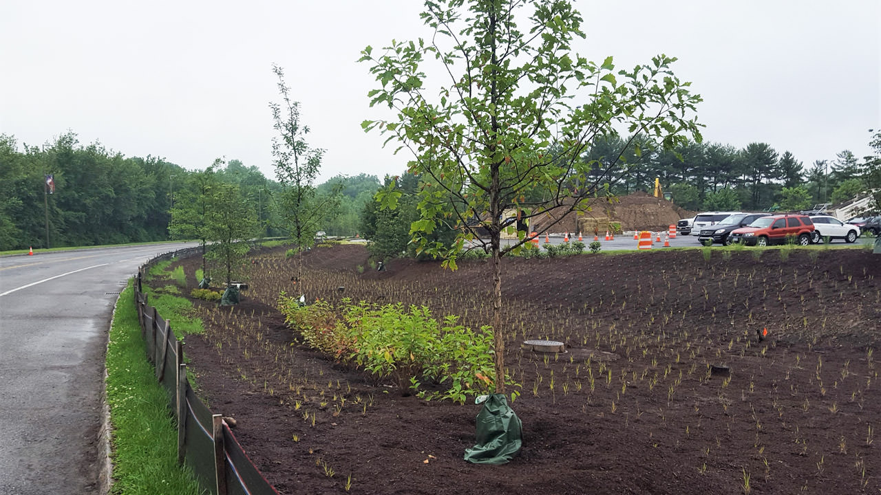 Green Infrastructure SUNY